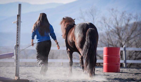 rapporto uomo cavallo